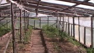 Летние хлопоты в парнике. Уход за помидорами(Видео о том, как я провожу лето в