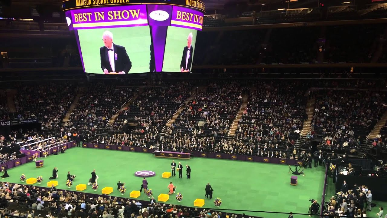 Best In Show Final At Westminster Kennel Club Dog Show