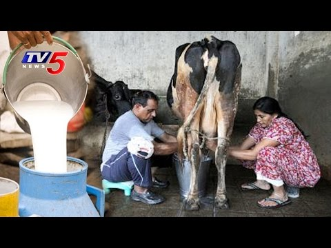 Cow Milk Competitions