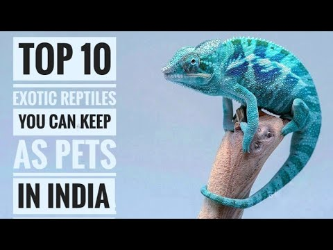 Top 10 Exotic Reptiles You Can Keep As Pets In India ...