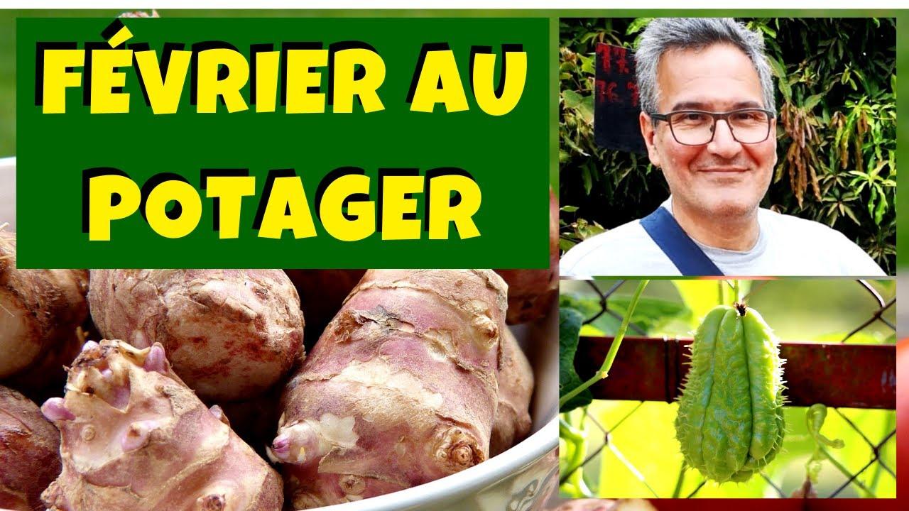 Que Faire Dans Le Potager En Fevrier que planter au jardin potager en février ?