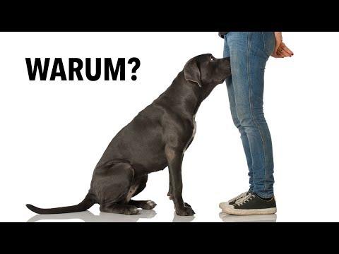 Das ist der Grund, warum Hunde den Intimbereich beschnuppern!