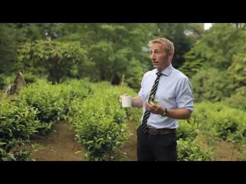 Superfast Cornwall - Tregothnan Tea grow with superfast broadband