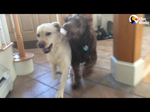 Long Time No See: Dog Meets His Best Friend!