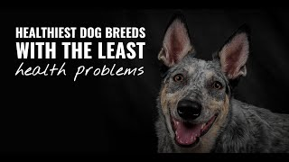 10 Healthiest Dog Breeds  Dogs Live The Longest