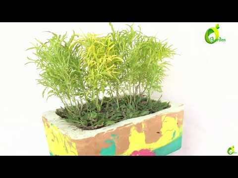 making colorful pot without painting/planter ideas/ cement colorful pots/organic garden