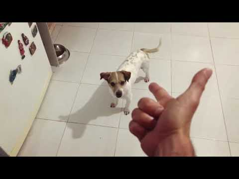 best dog trick how to die