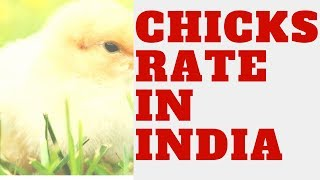 One Day Old Chicks Rate