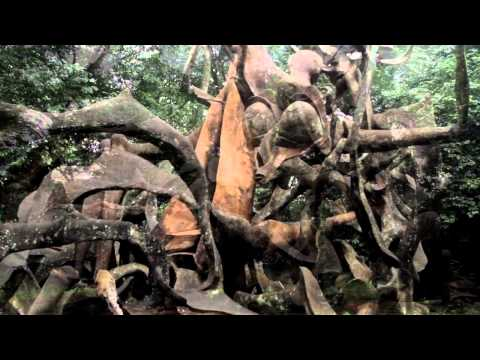 Discover Nigeria with ZODML: Osun-Osogbo Sacred Grove