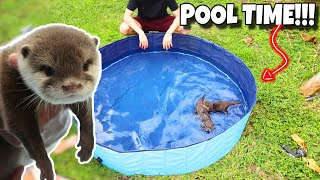 new-baby-otters-go-swimming-in-mini-pool-adorable