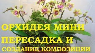 Орхидея Фаленопсис мини, пересадка и создание композиции.(Орхидеи пересаживаю и создаю композицию из фаленопсисов. Все о цветах , рассаде, урожае и способах выращива..., 2016-05-24T17:34:29.000Z)