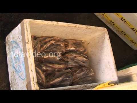 Fish Market in Agartala