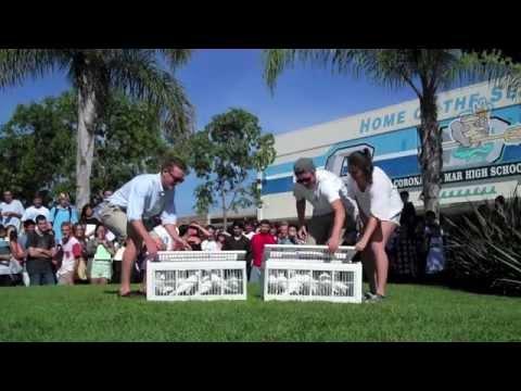 Corona Del Mar High School White Doves 714-903-6599 Newport Beach CA