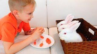 Vlad dan Mom memilih hewan peliharaan baru