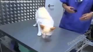 Приколы с животными, Fun with animals, смешные приколы про животных