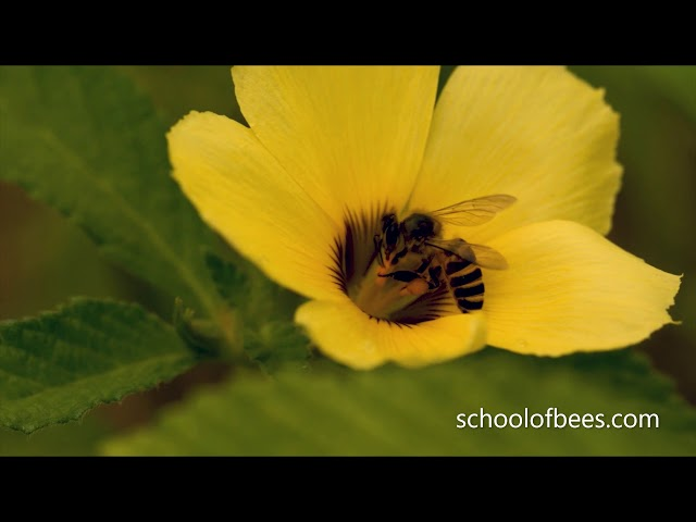 How Do Bees Transfer Pollen?