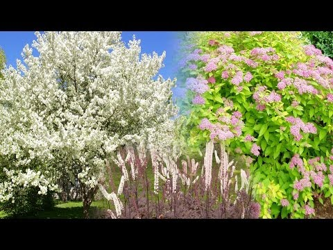 Great Landscaping Trees, Shrubs and Perennials # 1