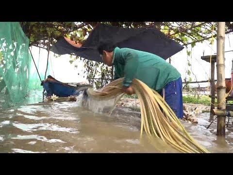 Tin Lũ Lụt Mới Nhất: Đồng Tháp đón lũ sớm, nhiều sản vật tràn đồng