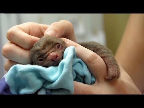 Cutest Baby Animals   BBC Earth