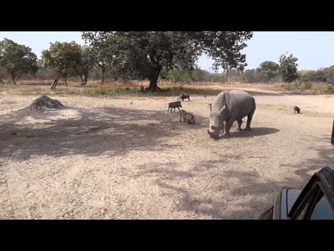 Fathala Wildlife Reserve - Senegal - First Encounter
