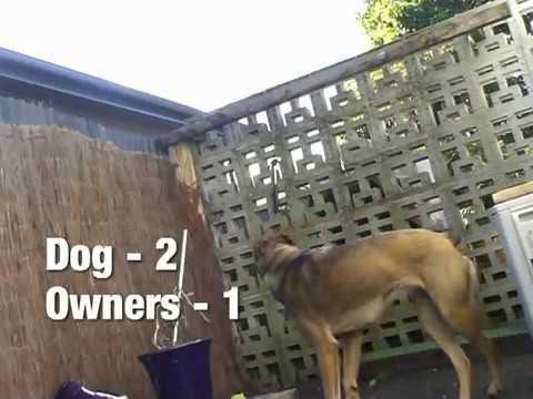 the great dog escape doovi