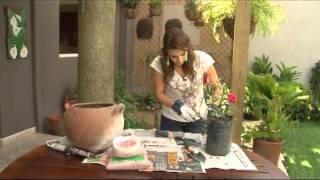 Los secretos de Raquel - Consejos para sembrar rosas
