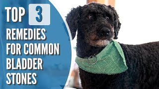 Bladder Stones in Dogs and Cats: Top 3 Effective Remedies