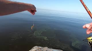 Финский залив,ловля окуня в заброс .