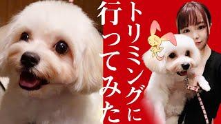 【月1ルーティン】愛犬とトリミングへ行きます