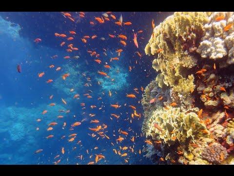 Diving In Red Sea, South & St. Johns, Egypt - Emperor Elite - Mergulho No Mar Vermelho (Part 1)