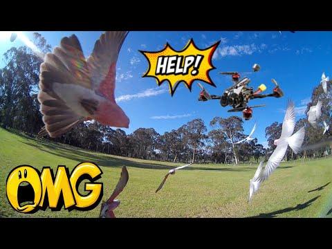 Фото Happymodel Larva X HD - REVIEW FPV & FLIGHT..... WARNING!