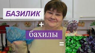 видео Как вырастить базилик