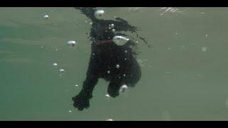 Cats swimming at the beach  underwater camera!