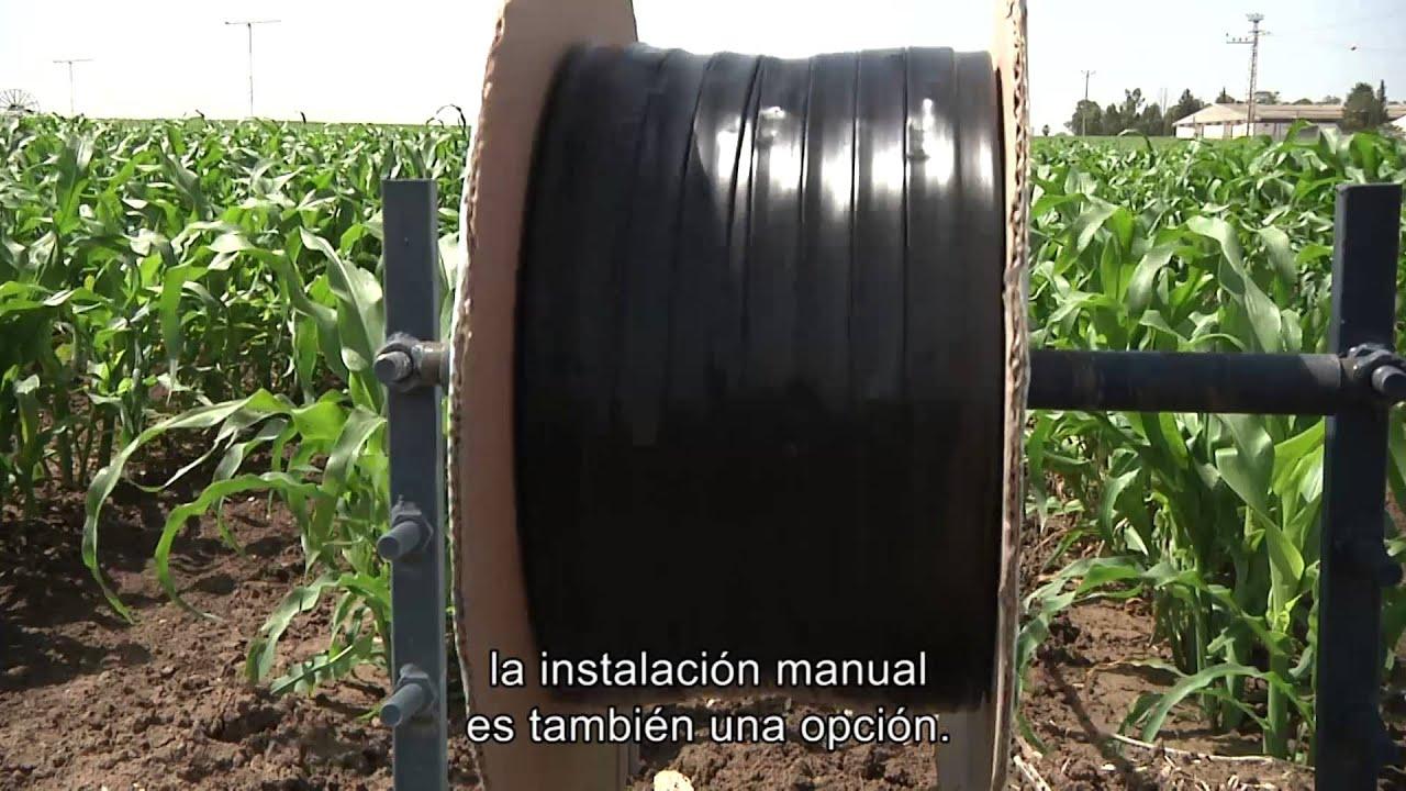 Cultivo de ma z mediente riego por goteo youtube for Aspersores para riego de jardin