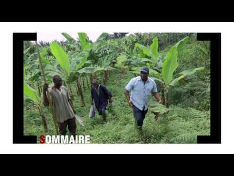 Réussite - Le nouveau programme africain diffusé sur Canal+ Afrique