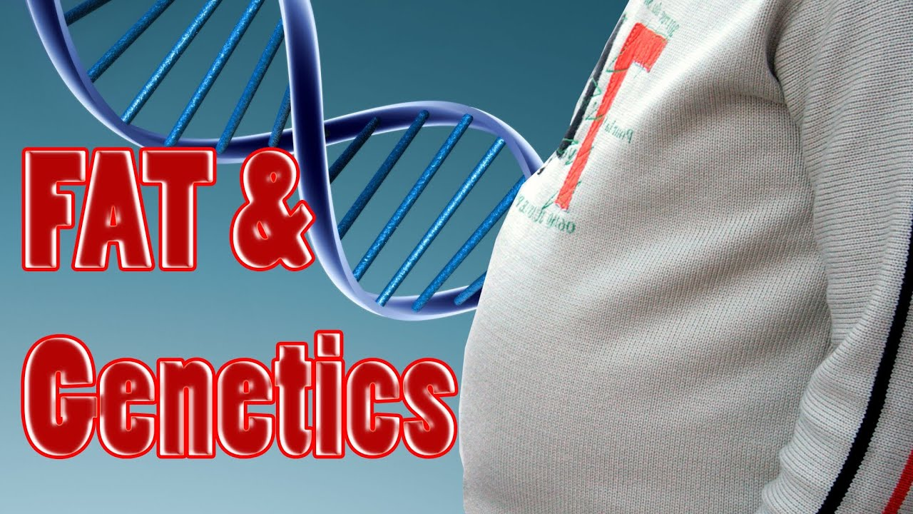 obesity genetics Etiology genetic factors of overweight and obesity how do genes affect obesity summary: science shows that genetics plays a role in obesity genes can directly cause obesity in disorders such as bardet-biedl syndrome and prader-willi syndrome.