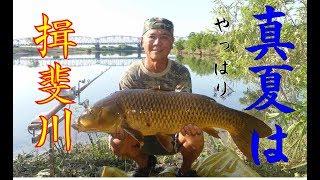 真夏はやっぱり揖斐川の野鯉釣り