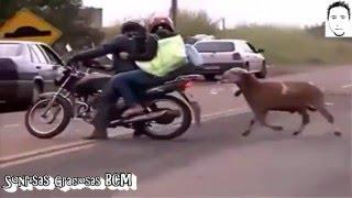 Peleas GENTE vs ANIMALES Caidas Golpes Sustos Fails Enero 2016 #1