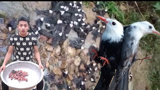 NháTV : đi đánh chim đầu mùa