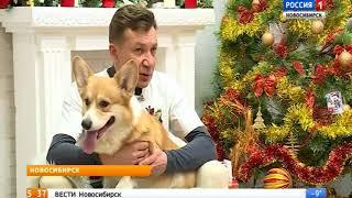 «Вести» узнали про особенности характера собак породы вельш-корги пемброк