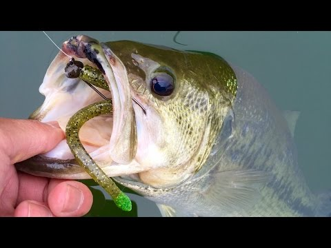 Jerkbaits To Finesse Fishing - Unlocking The Bass Pattern At Loch Raven Reservoir