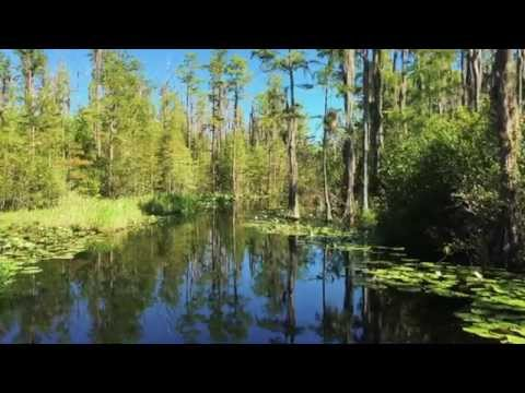 The Okefenokee Swamp Park