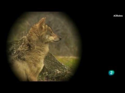 """ZAMORA - """"De lobos y hombres"""" - Sierra de la Culebra - 5/6/2014"""