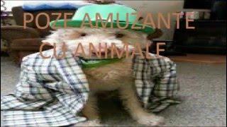 POZE AMUZANTE CU ANIMALE EPISODUL 1