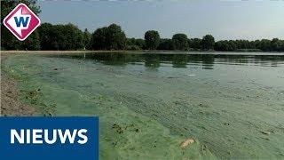 Bijna één miljoen euro voor aanpakken blauwalg - OMROEP WEST