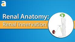 hqdefault - Parasympathetic Nervous System Kidney