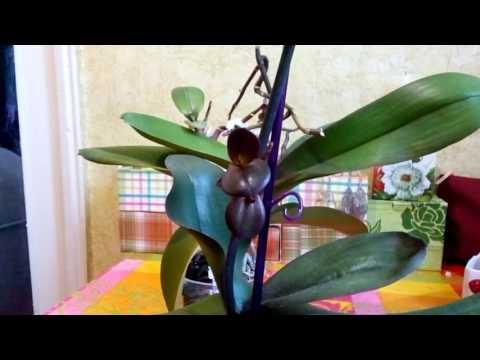 Уход за орхидеями,Орхидеи,Виды орхидей,фото и видео