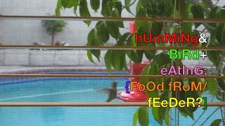 Hummingbird Feeder W/ Sugar Water Mix / Nectar Recipe From Store Attracting Humming Bird On Video