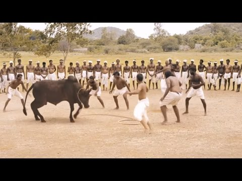 Ferocious Jallikattu Scene From Ilami Showing The Intensity Of Tradition || 2016 Kollywood Movie