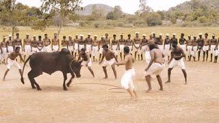 Ferocious Jallikattu Scene from Ilami showing the Intensity of Tradition || 2016 Kollywood Movie